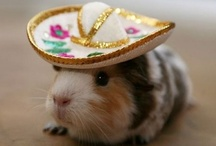 Halloweeeeeeen!!! / post your cutest, most adorable & funnest pet costumes & other things too... / by ✿ Villa Collezione ✿