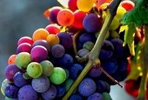Our Vineyards  / by Ceja Vineyards