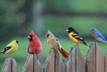 Feathered Friends / Cool ,Cute & Beautiful Birds / by Sue A.