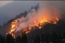 Wildfire / Wildfire, Wildland Firefighting, Fire Science, Fire Ecology / by Shannon Agner