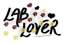 Lab Love / by Gina Freese
