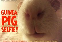 Guinea Pig Addiction / Cuz I wuv my wee wittle piggy wiggy and cant help myself when I see these cute little creatures. / by Nancie Richard