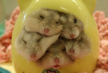 Hamsters / by Alessandra