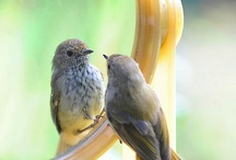 BIRDS ~ NATURE'S MUSIC / by Sandy