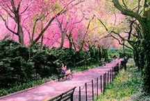 Spring / Photos of Spring / by Christa Avampato