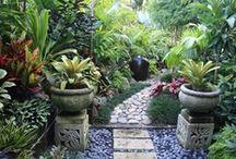 Gardens Tropical / by Miranda McCormack