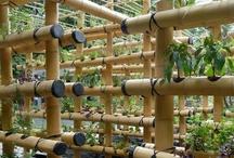 EC Gardening Ideas / by Allyson Puls-Dharmadji