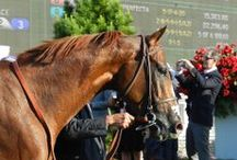 2014 Triple Crown Trail / by America's Best Racing