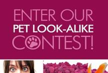 Pet Look-Alike Contest / To celebrate 100,000 likes on Facebook, help us get to know you—and your pet—by entering our Pet Look-Alike contest and you could win a WOUF for your pet and the 6'x9' woven cotton rug of your choice!  / by Dash and Albert Rug Company
