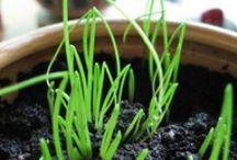 Gardening and Indoor/Outdoor Plants / by karen donofrio