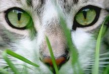 Cats / by Joyce Euverman