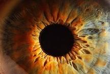 eyes / by Emily Meyers