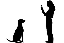 Dog Training Videos / by Barkingstud.com