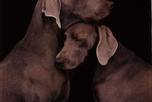 womens best friend / dogs / by Susan Neas