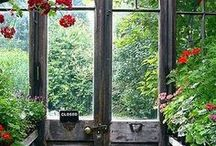 Greenhouse Love / by My Soul
