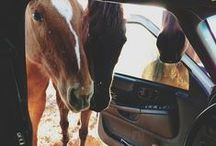 Horses / Equestrian for life. / by Emily Styles