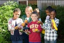 Farm to Fork / Learn how you can get food from local farms to the places you are eating, whether that is at school, at local restaurants, or at home. / by University of Minnesota Extension Family Development