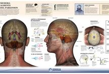 Infographics brain & psy / by NeuroPsy - Brain and Mind