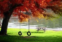 Autumn / by Rhonda Stephens