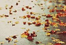Leaves Are Falling. / autumn/fall/leaves/pumpkins/ / by Sarah Cote