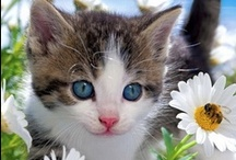 Cute Cat Photos / Cutest cat photos that would make you smile. Cute cat pictures with captions. Cute and funny pictures of adorable baby cats and lovely kittens  / by Funny Pet Pictures