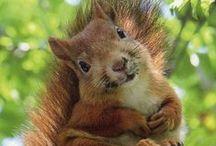 Squirrels / by Chrissy