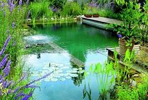Playing in dirt / Front and backyard inspiration and gardening ideas / by Shelley Stevens