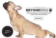 BEYOND DOG (April Fools!) / by BEYOND YOGA