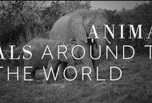 Animals around the World / by Marriott Hotels