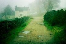 Green / by Pawel Dolatowski