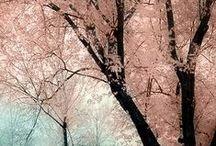 Pink / by Pawel Dolatowski