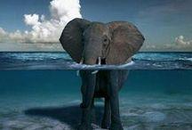 Elephants / by Kathryn Janeway