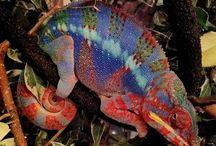 Lizards / Many many many lizard species for you lizard lovers / by Jk Gruft