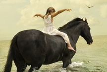 The Tao of Equus Favorites / by Paula Frakes