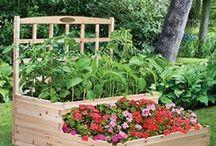 Garden Ideas / by Paula Frakes