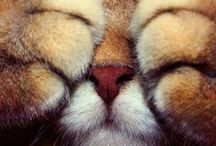 =^..^= Kitteh Kitteh =^..^= / Collection of Cats - Big, Little, Wild, Domesticated / by Coveted Temptations