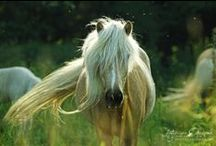 Equine ~ Horses & Ponies / by Coveted Temptations