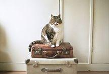 ~ The cats 2 ~ / by Amina O with ♥ @ postmodern Amina O blog