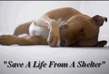 Animal Advocacy & Adoption Board / A pinned list of adoptable animals all over the country, animal rights and issues that impact their lives. Please take a moment to re-pin, ever pin is another chance that these lovable pets may find a home and a loving family. Thank you to each of you who follow and re-pin. / by C B