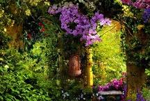 Greenhouse/Garden / by Laila Sabet