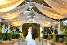 My Dream Wedding / by Abbie Santangelo