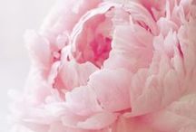 Floral Inspiration / by Megalith Studios
