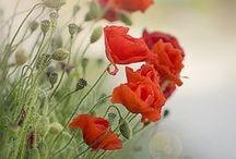 G a r d e n / garden inspiration, tips & craft ideas / by Janine Buisman