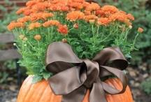 autumn <3 / by Melinda Tilton