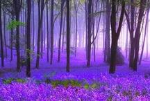 purple / by Melinda Tilton