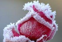 Art & Photography / Beautiful Art & Photography / by inRandom