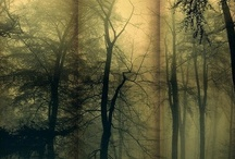Trees- The Magic Within / by Lezlie George