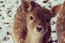 Cuteness!!! / by Cristen Olsen