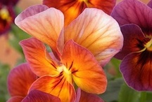 Ah, flowers! / by Janet Slack