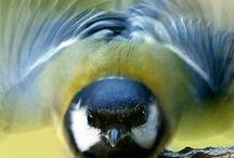 Beautiful birds / by Janet Slack